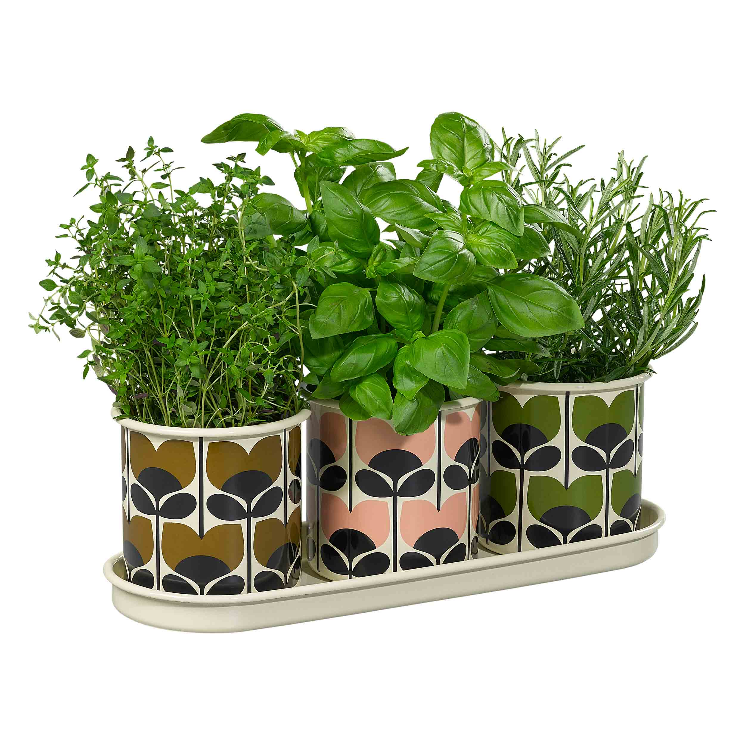 3 Herb Pots with Tray, Climbing Rose
